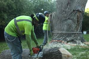 Trimming Your Tree In Denver