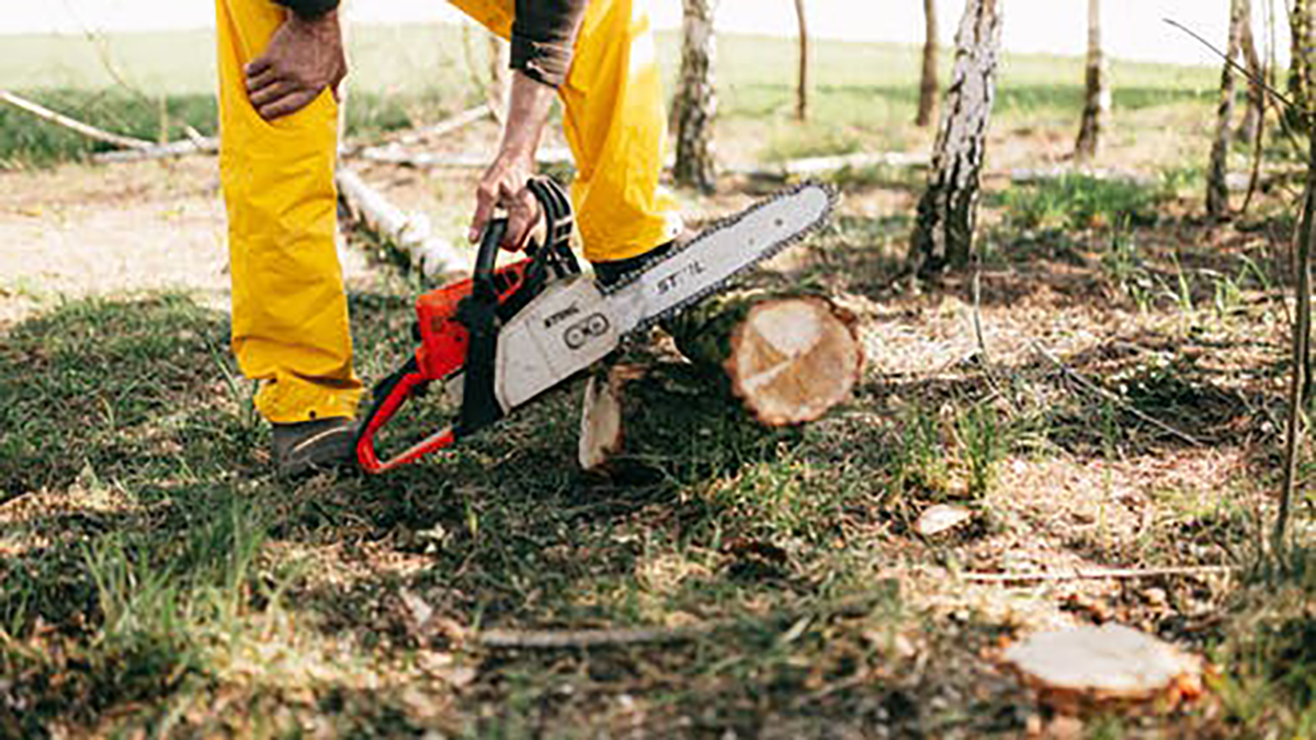 Helpful Tips For Finding the Best Tree Removal Service