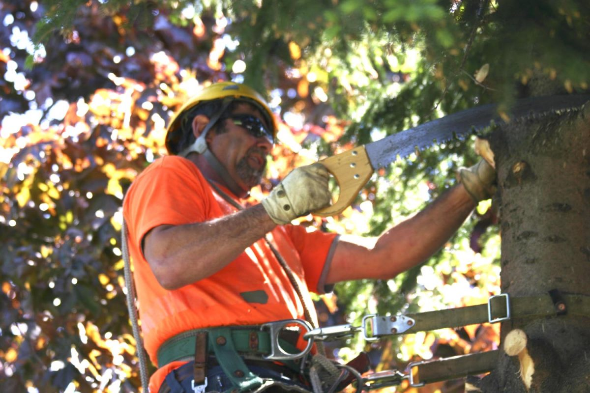 Tree Removal – How to Find a Good Service