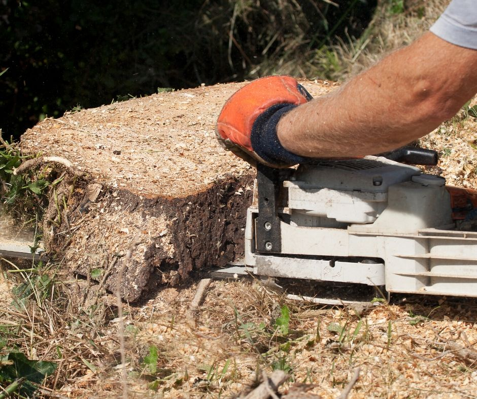 Three Of The Best Course Options When It Comes To Tree Removal